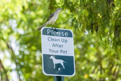 在海滩标志栖息的鸟 免版税库存图片