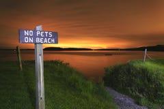 在海滩标志的没有宠物。 免版税库存图片