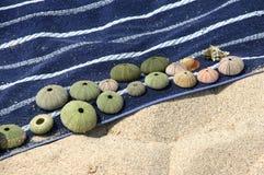 在海滩毛巾的壳 免版税库存图片