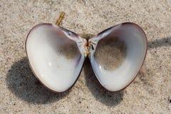 在海滩沙子的小壳 免版税库存照片