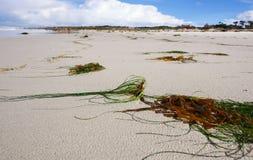 在海滩沙子的海草  免版税库存照片