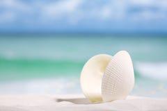 在海滩沙子的白海壳 免版税库存照片