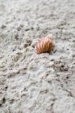 在海滩沙子的蜗牛爬行 免版税库存照片