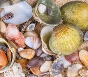 在海滩沙子背景II的蛤蜊 免版税库存图片