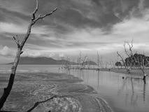 在海滩沙捞越马来西亚的死的树 免版税库存图片