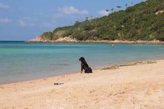 在海滩泰国的狗 免版税库存图片