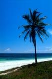在海洋海岸的偏僻的棕榈 免版税库存照片