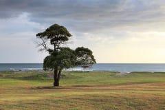 在海洋海岸的树 免版税库存照片