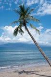在海洋海岸附近的棕榈 免版税库存照片