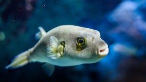 在海/海洋,水世界钓鱼 库存照片