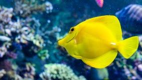 在海/海洋,水世界钓鱼 免版税库存图片
