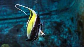 在海/海洋,水世界钓鱼 图库摄影