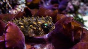 在海/海洋,水世界钓鱼 库存图片