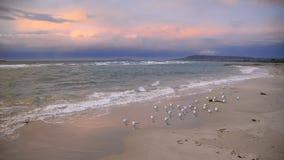 在海洋海滩的海鸥在日落 免版税库存图片