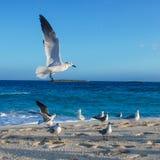 在海洋海滩的海鸥 免版税库存图片