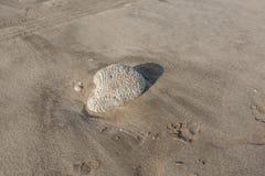 在海滩洗涤的珊瑚 免版税库存图片