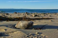 在海滩洗涤的蛤蜊 免版税图库摄影