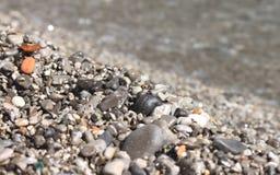 在海滩特写镜头的湿小卵石石头 免版税图库摄影