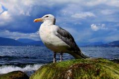 在海洋的一个海鸥 免版税库存照片
