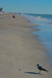 在海滩的一只鸟在印地安岩石在墨西哥湾,佛罗里达靠岸 免版税图库摄影