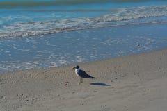 在海滩的一只鸟在印地安岩石在墨西哥湾,佛罗里达靠岸 库存图片