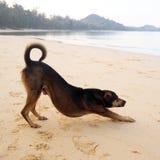 在海滩的一条孤独的狗 库存图片