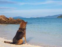 在海滩的一条狗 库存图片