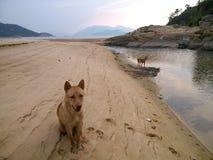 在海滩的一条狗 免版税库存图片