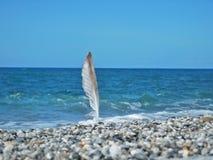 在海滩的一根海鸥垂直的羽毛 免版税图库摄影