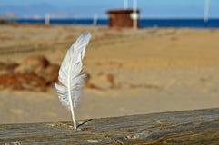 在海滩的一根羽毛 免版税库存图片