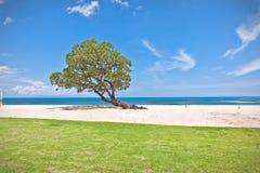 在海滩的一棵绿色树 免版税库存图片