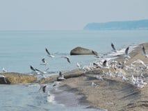 在海滩的一次海鸥群飞行 免版税图库摄影