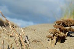 在海滩的两个小的蘑菇 库存照片