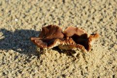在海滩的两个小的蘑菇 免版税库存图片