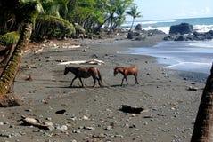 在海滩的两匹马 库存图片