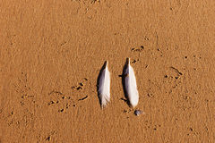 在海滩的两根白色海鸥羽毛 库存照片