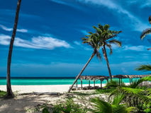 在海滩的两棵亲吻的棕榈 图库摄影