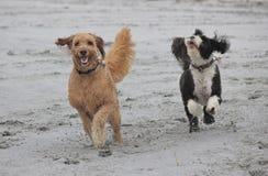 在海滩的乐趣 免版税库存图片