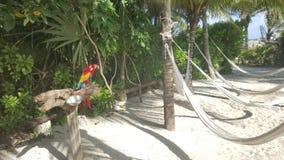 在海滩的五颜六色的guacamayas 免版税库存图片