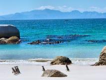 在海滩的企鹅,在天际的山 免版税图库摄影