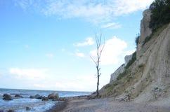 在海滩的偏僻的树 免版税库存图片