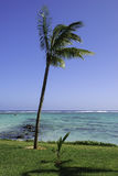 在海滩的偏僻的棕榈 库存照片