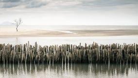 在海滩的偏僻的结构树 免版税图库摄影
