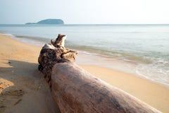 在海滩的停止的结构树 库存照片