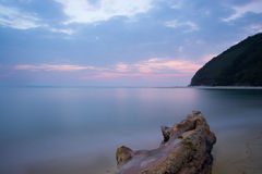 在海滩的停止的结构树 免版税库存照片
