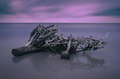 在海滩的停止的结构树 免版税图库摄影