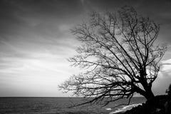 在海滩的停止的结构树 免版税库存图片