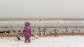在海滩的儿童观看的鸟 免版税库存图片