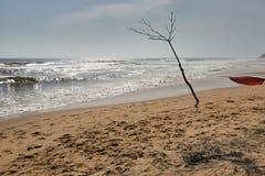 在海滩的光秃的树 免版税库存图片