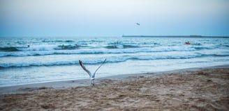 在海滩的全景日落 免版税库存图片